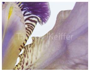 Iris | Image 4