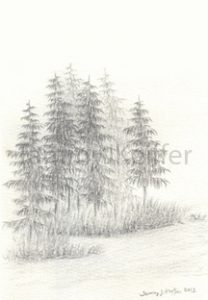 Pine Tree Cluster Sketch | Image 3