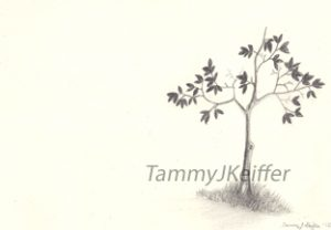 Scrawny Tree Sketch | Tammy J. Keiffer