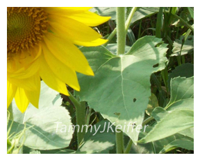 SunFlower | Image 1