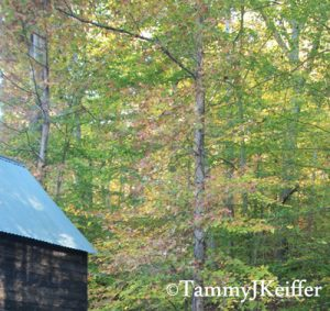 Side Roof of Cabin With Wooded Area