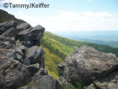 Shenandoah Skyline Mtn Top   Image 6