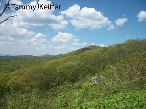 Shenandoah Skyline Mtn Top   Image 18