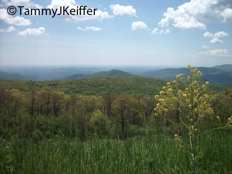 Shenandoah Skyline Mtn Top   Image 10