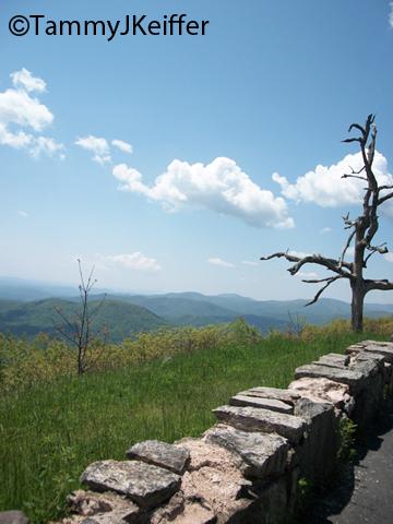 Shenandoah Skyline Mtn Top   Image 11