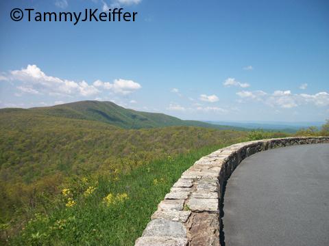 Shenandoah Skyline Mtn Top   Image 13