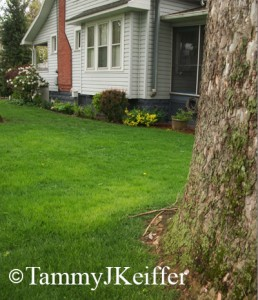 Side Lawn   Image 4