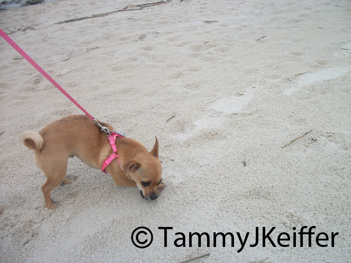 Delilah's first time at the beach | image 3
